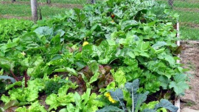 Food Series Garden